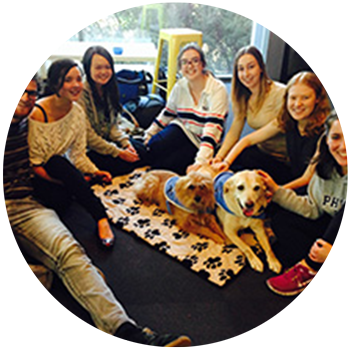 Therapy-Dog Communication Group